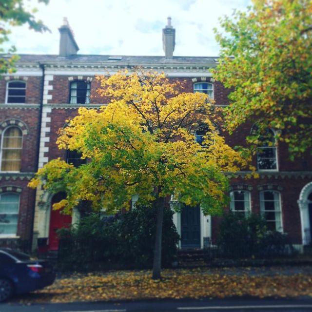Love_autumn_in_South_Belfast._Yellow_leaves_against_red_bricks._Stunning.__Belfast__Clarendon__Autumn